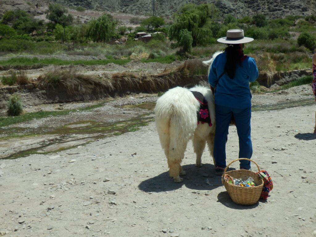 Llama in Purmamaca